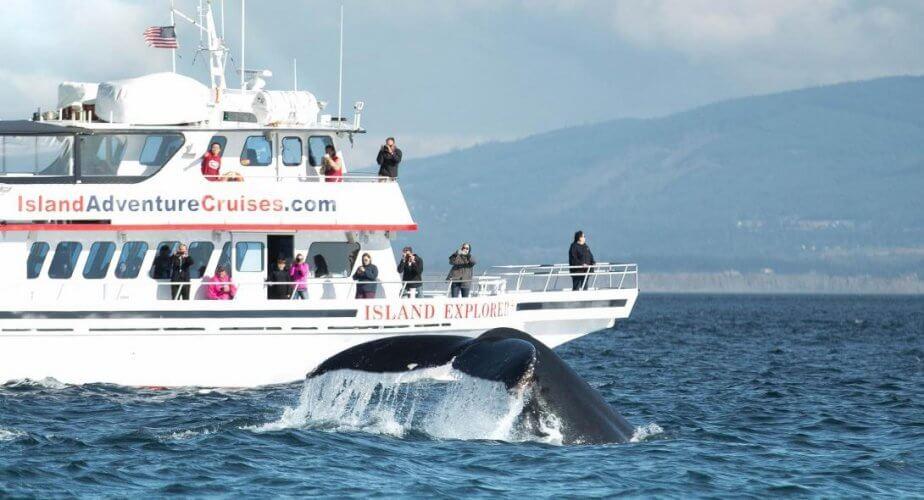 Ιαπωνία: 87 τραυματίες από σύγκρουση ενός φέρι με μια φάλαινα