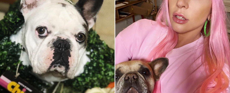 Επεστράφησαν τα δύο σκυλάκια της Lady Gaga