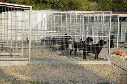 Τα δίκαια αιτήματα των εκτροφέων σκύλων