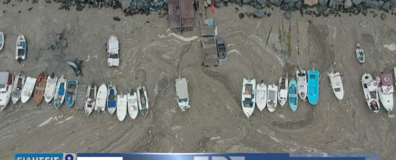 """Εφιάλτης στη θάλασσα του Μαρμαρά – Η """"βλέννα"""" που σκοτώνει τα πάντα (video)"""