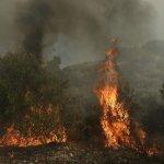 Η καταστροφή συνεχίζεται. Φωτιά στα Βίλια – Συναγερμός στην Πυροσβεστική